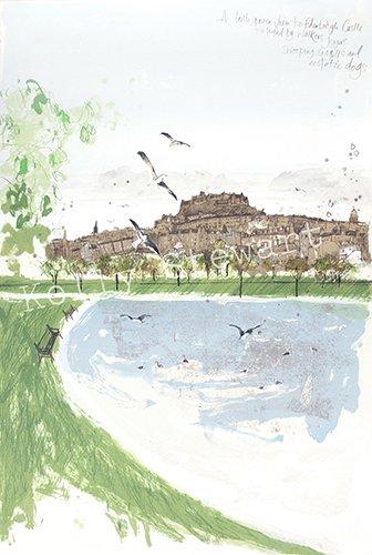 seagulls at inverleith 2015